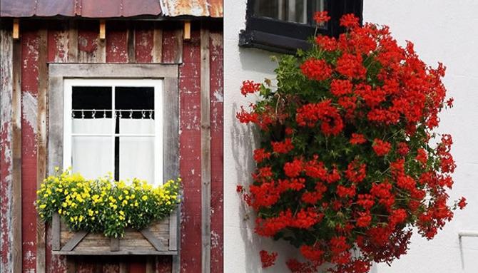 osmanlı pencere çiçekleri